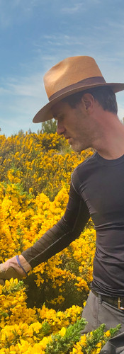 Gorse picking for No8 Hibiscus gin.jpeg