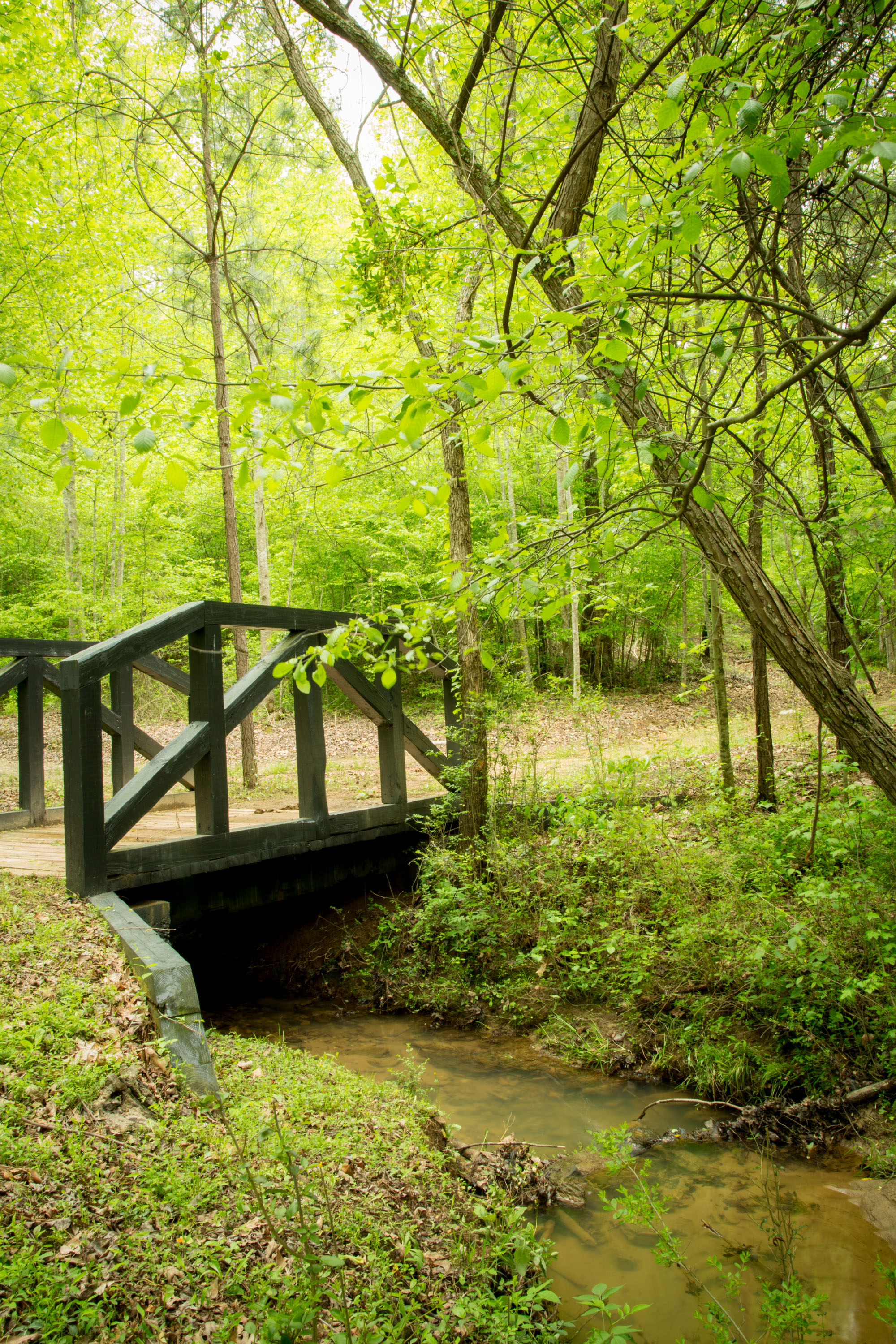 Bridge over the creek