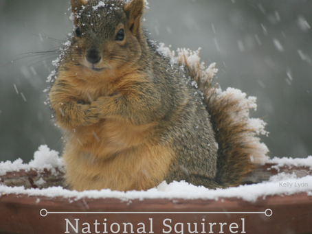 Celebrating Squirrels