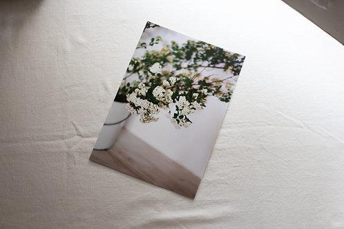 Ramos em flor