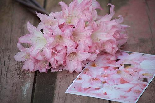 Açucenas flor