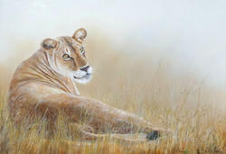 Lionne couchée