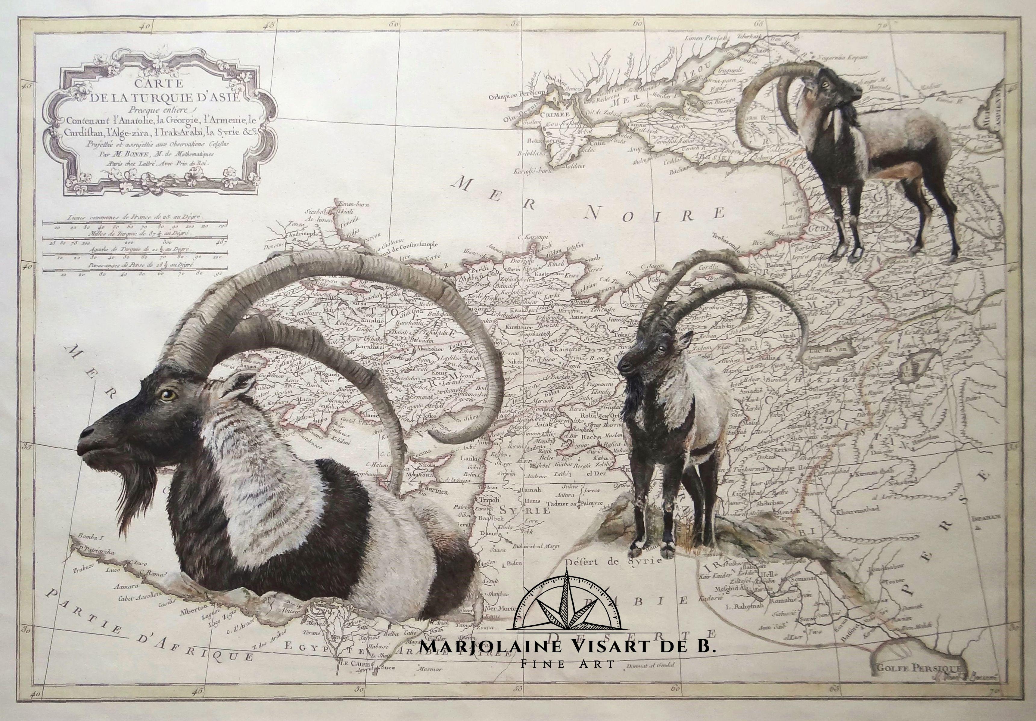 Bezoar, carte turquie,  80 cm x 60 cm
