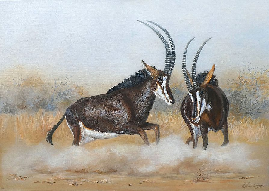 antilopes des sables