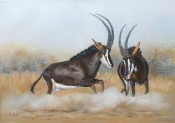antilopes des sables