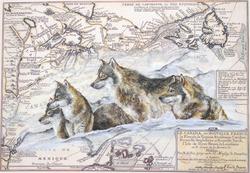 Meute de loups