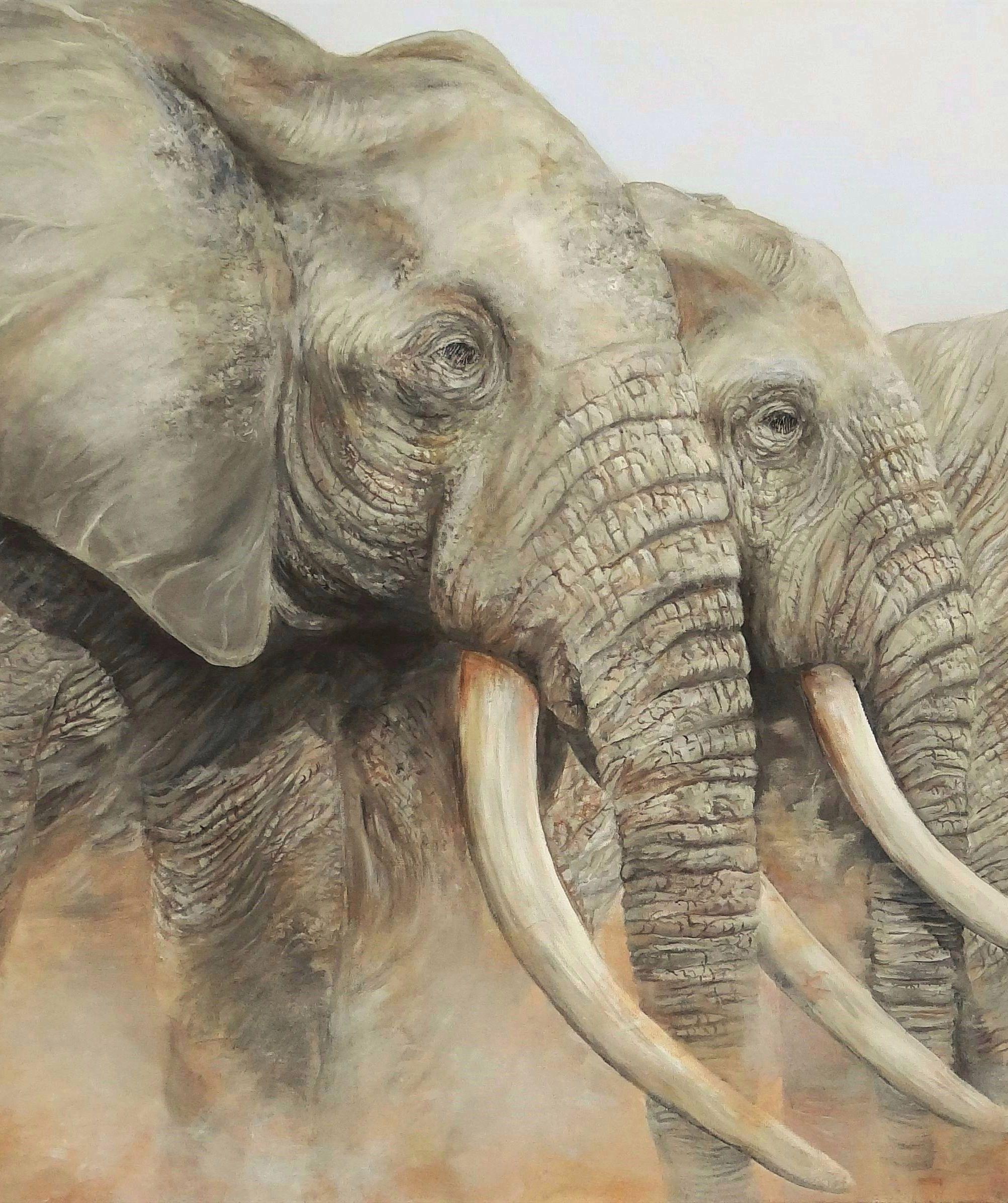 Portrait têtes éléphants
