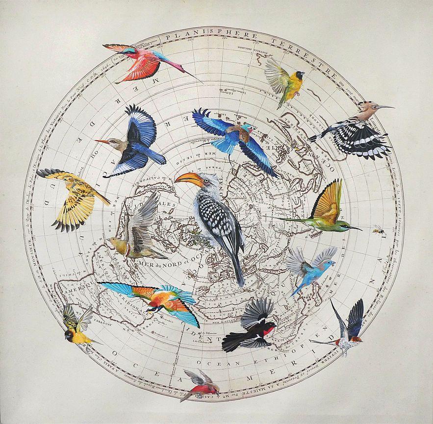 Oiseaux de Namibie