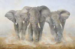 Trio d éléphants en charge