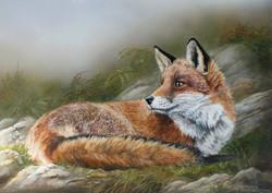 renard roux