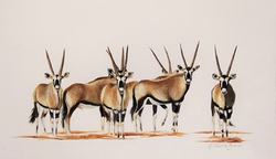 Troupeau d oryx