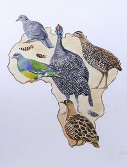 Oiseaux d Afrique