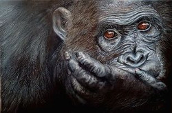 bonobo 60 cm x 40 cm