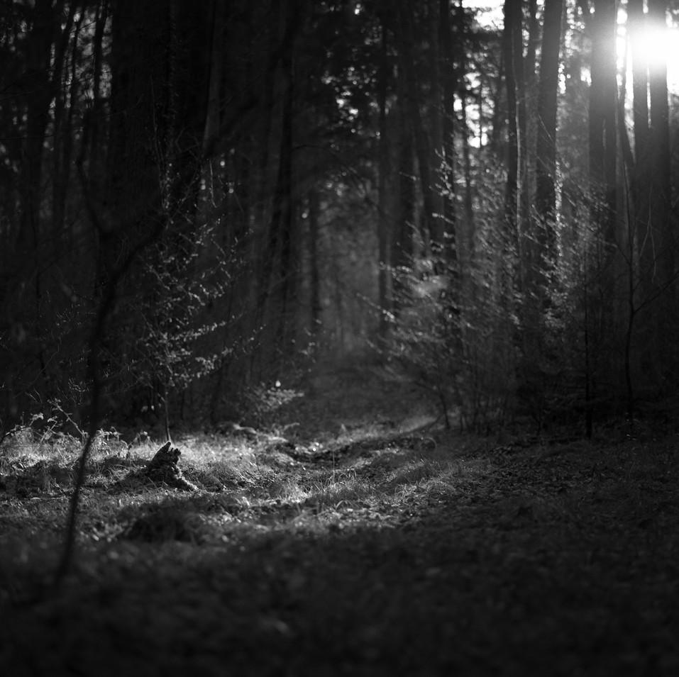 Film#19-Frame10.jpeg