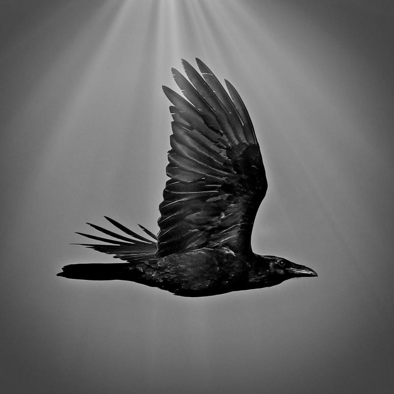 Raven Day