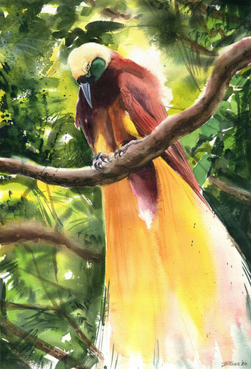 Greater Bird of Paradise-LR bewerkt.jpg