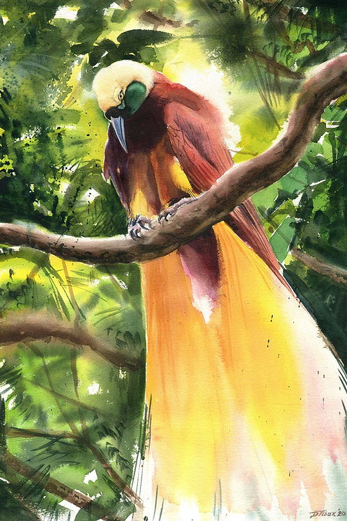 Greater Bird of Paradise study (original sold)