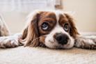 A intoxicação alimentar em animais é tema de reportagem na EntreVerbos
