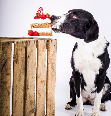 Hundegeburtstag feiern