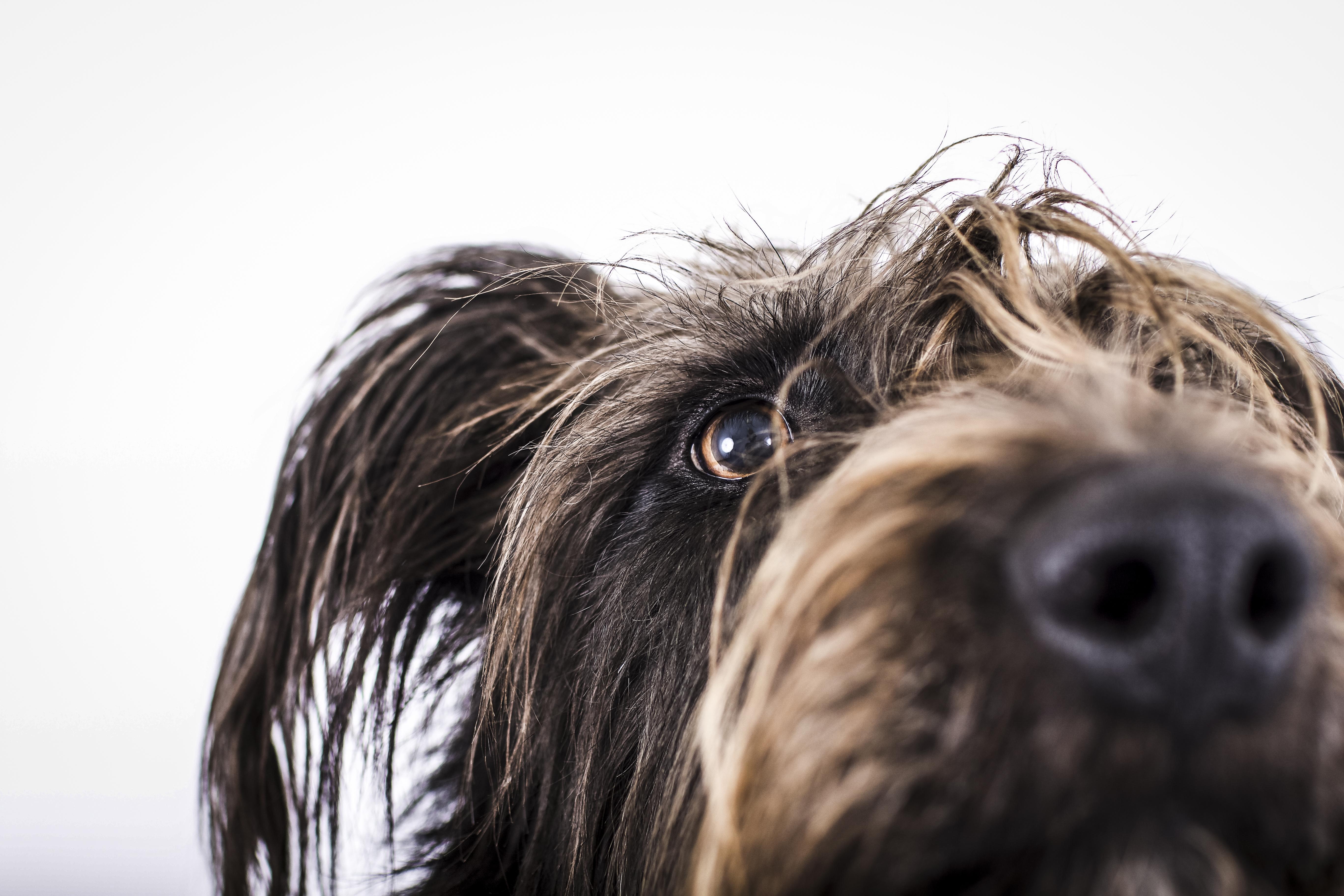 TRUDI Hundefotografie