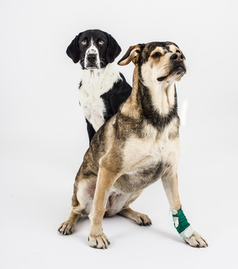Hundeschwestern