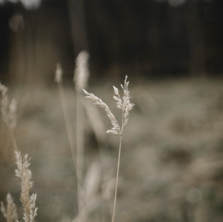 Fotoreportage in der Natur
