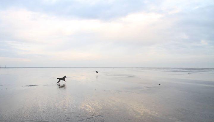 Freilauf am Strand