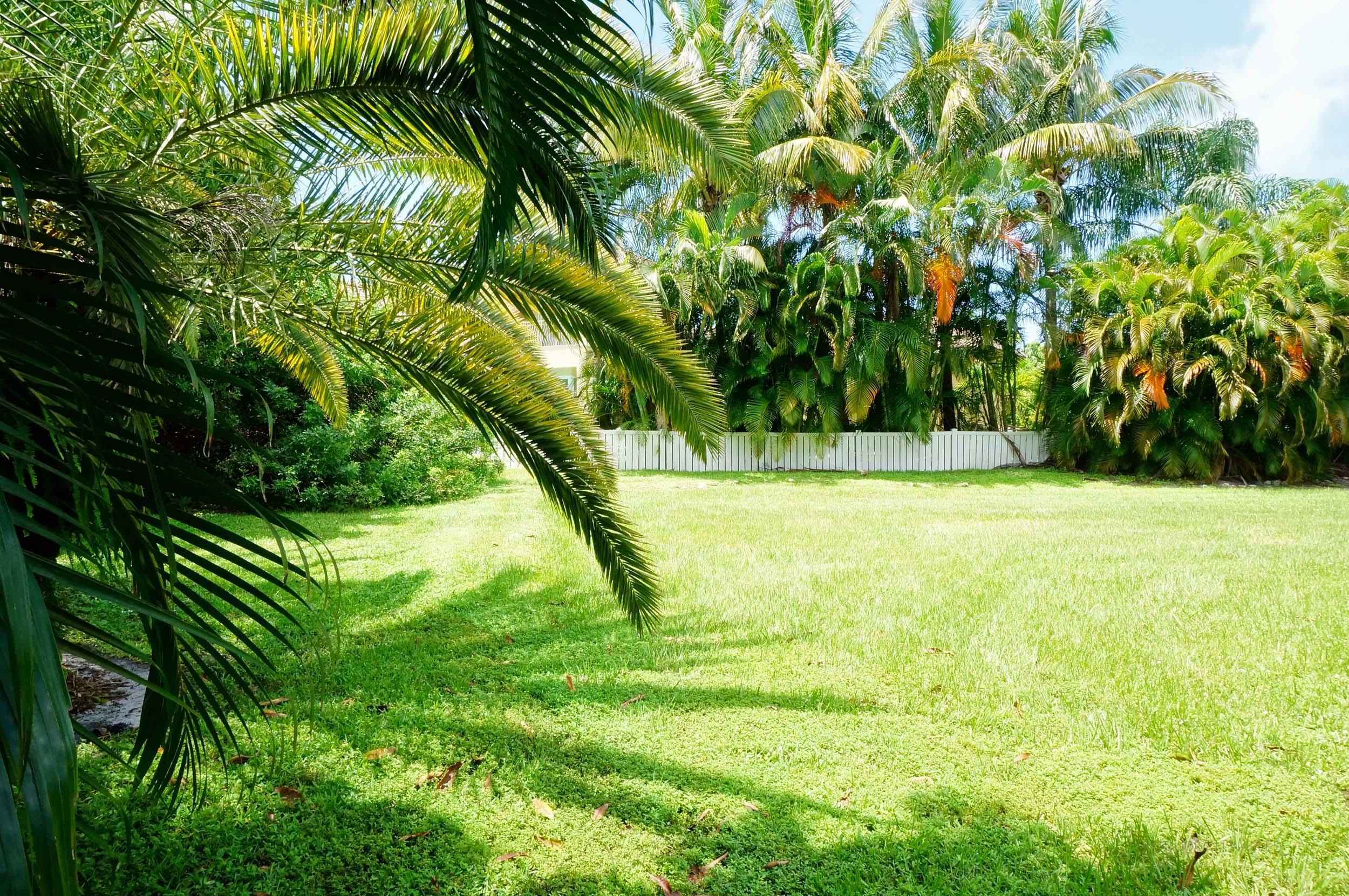 Mature Areca Palms, Bamboo, Ficus