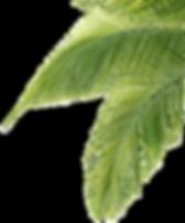 palm-tree-leaf-png-29.png