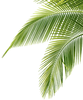 palm-tree-leaf-png-29.png