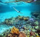 cms_cozumel_inline_snorkeling.jpg