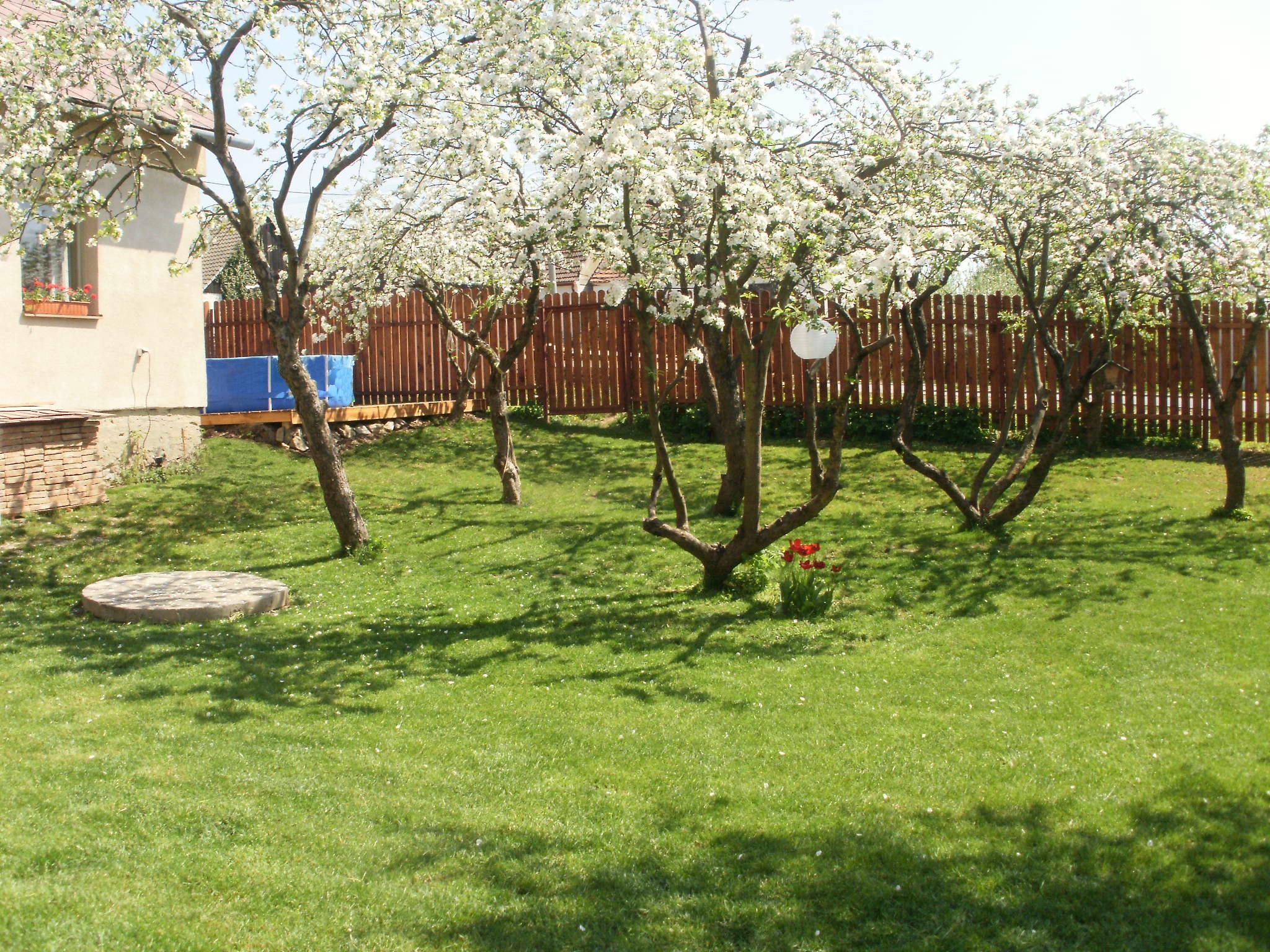 Zahrada s jabloněmi