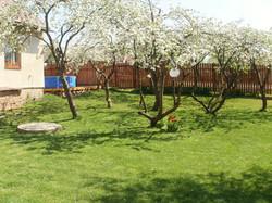 Garten mit Apfelbäume