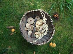 Pilzen sammeln