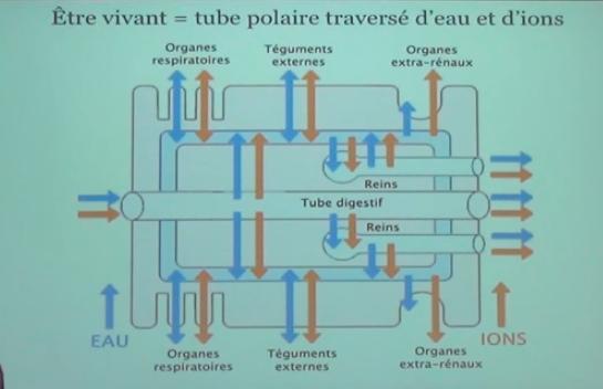 merus aquabion culligan bioticwater