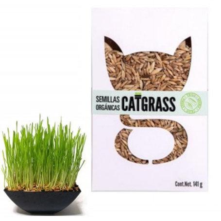 Pasto Orgánico Catgrass