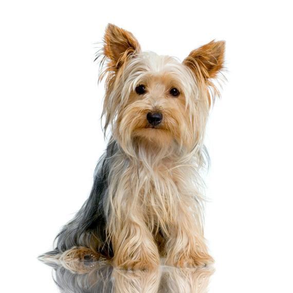 Baño perro XCH pelo largo