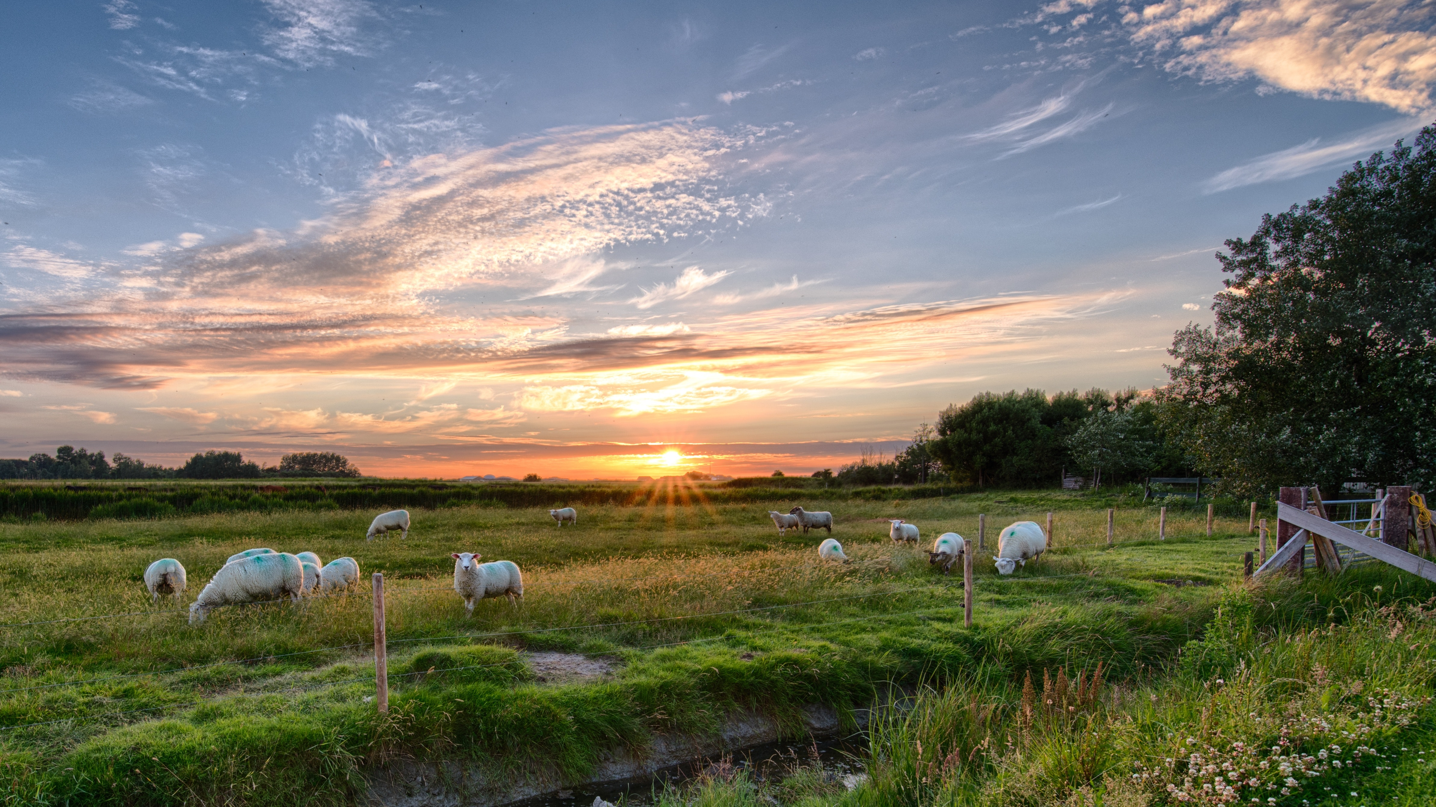 agriculture-clouds-country-462119 (1)