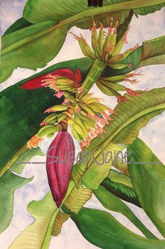 Banana Flower 3