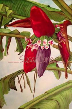 Banana Flower Phase 1
