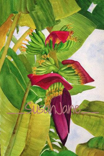 Banana Flower 2