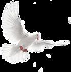 голуби 2_edited.png