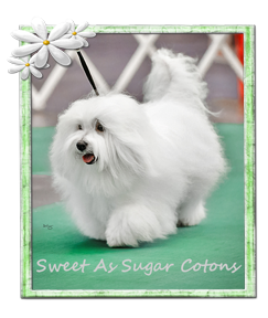 Sweet As Sugar Cotons 2020 Logo-BOE.png