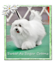 Sweet As Sugar Cotons 2020 Logo-BOE.png