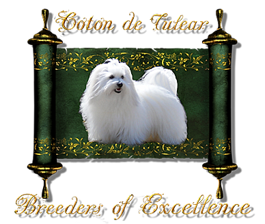 Breeders of Excellence Group Logo.png