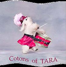 Coton de Tulear of Tara.png