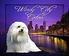 Windy City Coton Logo.jpg
