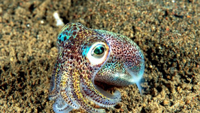 A Post Dedicated To Squids