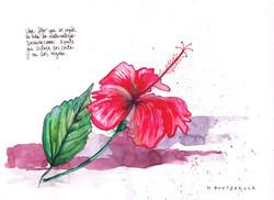 Detalle flor