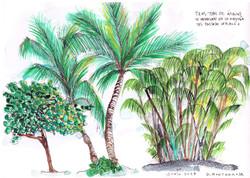 Vegetación típica
